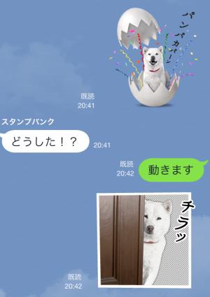 【動く限定スタンプ】白戸家ベストセレクション スタンプ(2014年11月03日まで)