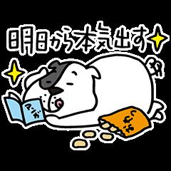 【限定無料スタンプ】ゆるかわ「たま丸」スタンプ(2015年12月28日まで)