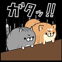 【無料スタンプ速報:隠しスタンプ】LINE LIVE×ボンレス犬&猫コラボ スタンプ(2016年03月02日まで)