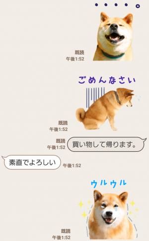 【公式スタンプ】柴犬まる スタンプ (7)