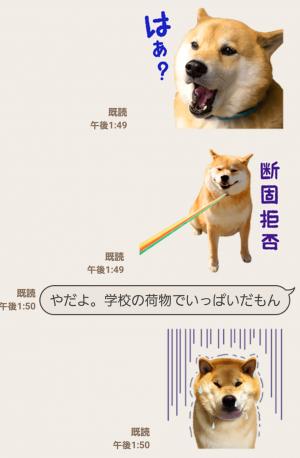 【公式スタンプ】柴犬まる スタンプ (5)
