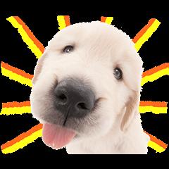 【公式スタンプ】THE DOG スタンプ
