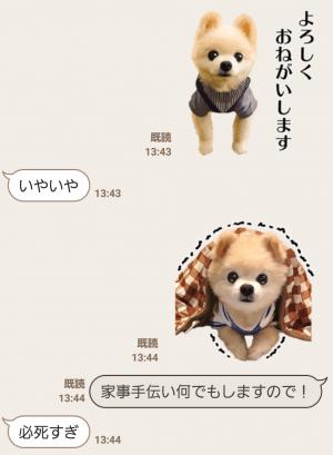【公式スタンプ】犬の俊介くん スタンプ (7)