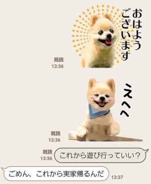 【公式スタンプ】犬の俊介くん スタンプ (3)