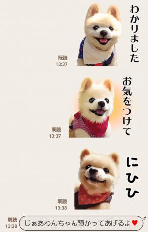 【公式スタンプ】犬の俊介くん スタンプ (4)