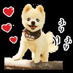 【公式スタンプ】犬の俊介くん スタンプ