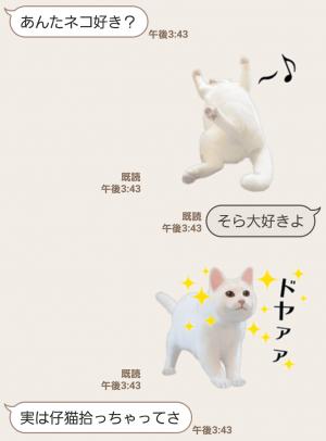 【人気スタンプ特集】自由すぎる!無重力猫ミルコ スタンプ (3)