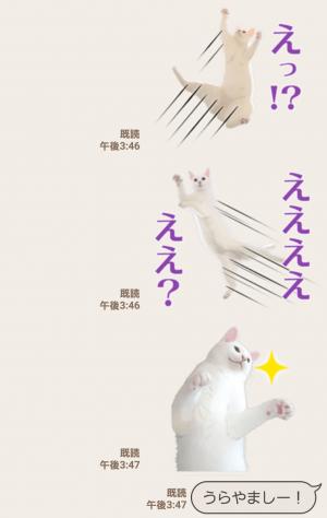 【人気スタンプ特集】自由すぎる!無重力猫ミルコ スタンプ (4)