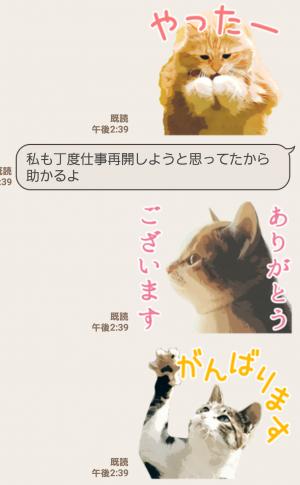【人気スタンプ特集】岩合光昭 ネコスタンプ (7)
