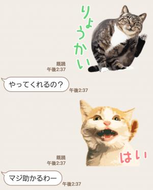 【人気スタンプ特集】岩合光昭 ネコスタンプ (6)