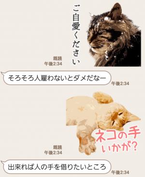 【人気スタンプ特集】岩合光昭 ネコスタンプ (4)