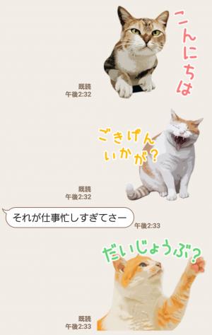 【人気スタンプ特集】岩合光昭 ネコスタンプ (3)
