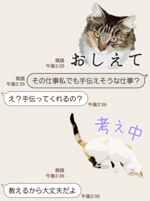 【人気スタンプ特集】岩合光昭 ネコスタンプ (5)