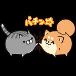 【限定無料スタンプ】ボンレス犬猫 x 便利アカウント スタンプ(2016年11月21日まで)