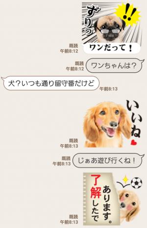 【人気スタンプ特集】かわいい犬たち スタンプ (5)
