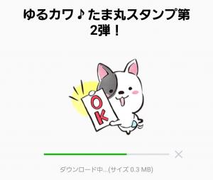 【限定無料スタンプ】ゆるカワ♪たま丸スタンプ第2弾! スタンプ(2017年04月10日まで) (2)