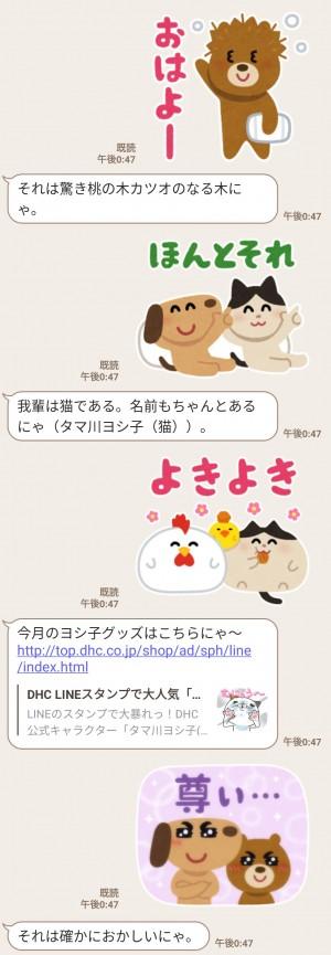 【限定無料スタンプ】夏だ!海だ!タマ川ヨシ子(猫)第22弾 スタンプのダウンロード方法とゲットしたあとの使いどころ (3)