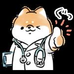 【限定無料スタンプ】ほんわかしばいぬ × LINEヘルスケア スタンプのダウンロード方法とゲットしたあとの使いどころ